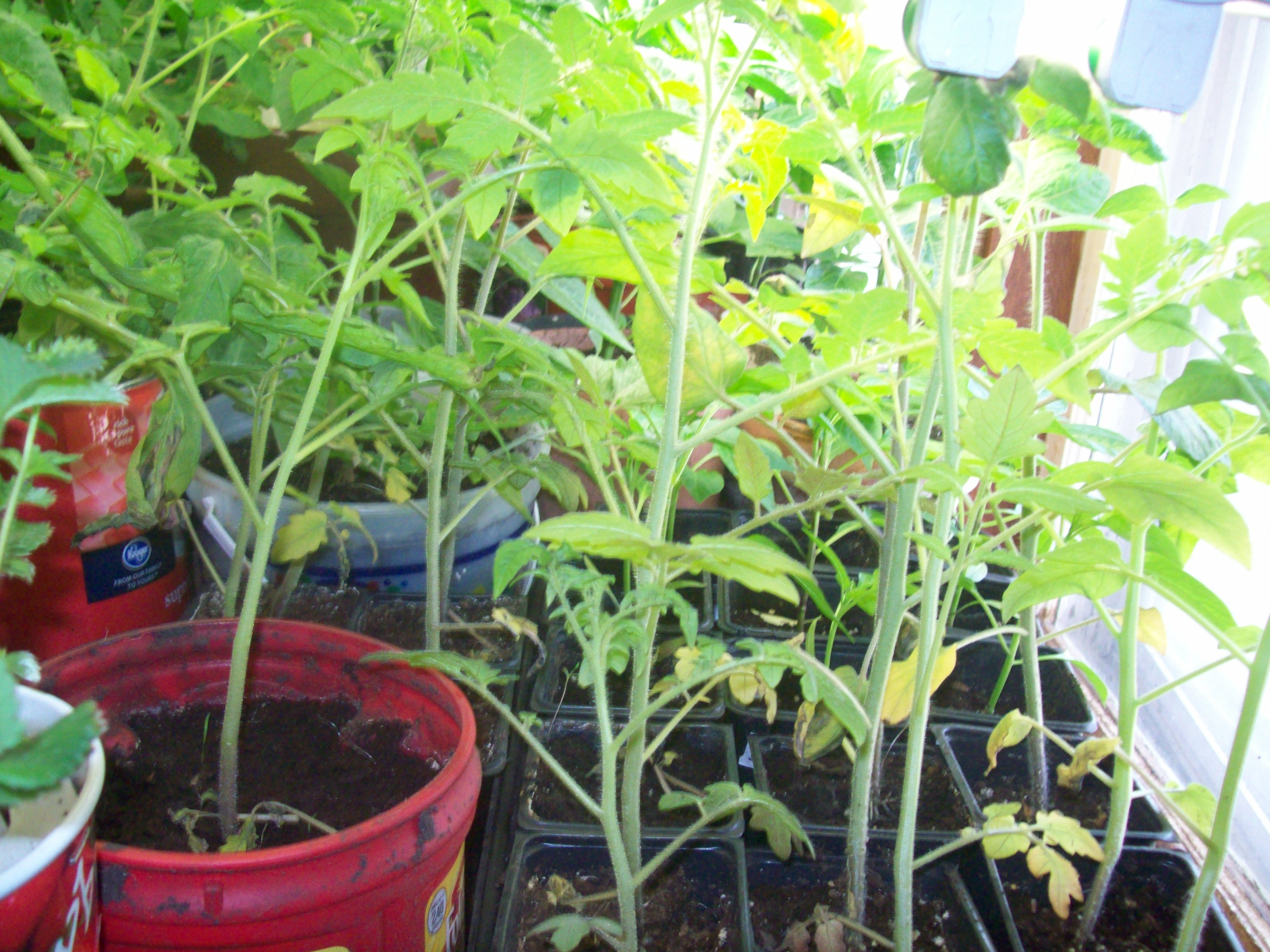 Growing Vegetables Indoors Createityourself